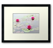 Water Lilies in the Morning Framed Print