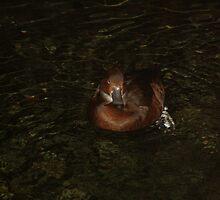 One Duck by Ginger  Barritt