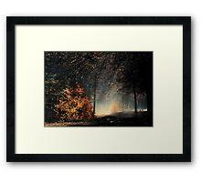 When the light is playing in the forest Framed Print