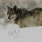 Winter Wolf #1 by Ken McElroy