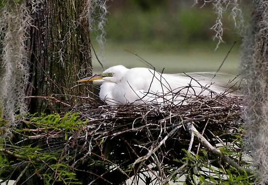 Waiting On The Eggs by Kathy Baccari