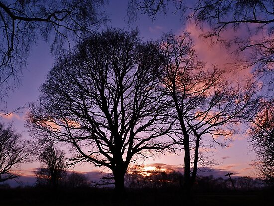 Woodland Edge Sunset by John Dunbar