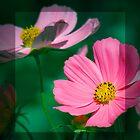 Pink Cosmos  by Karen Lewis