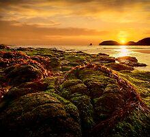 Bushranger's Bay, Cape Schanck by Emma  Gilette