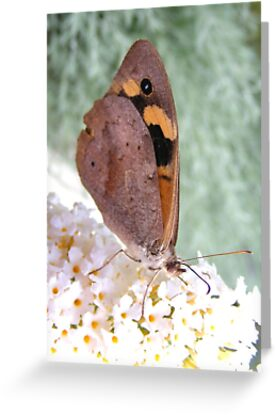 Australian Painted Lady by Esther's Art and Photography