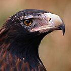 Wedge Tailed Eagle by Paula McManus