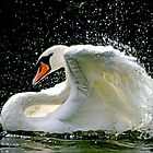 The Beauty Of The Mute Swan by Tamara  Kenneally