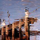 Jetty, Apollo Bay by Chris Allen