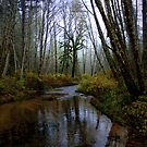 Head Of Alsea River by Charles & Patricia   Harkins ~ Picture Oregon