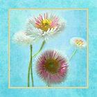 Flowers by John Trent