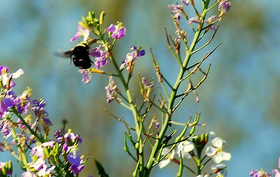 Mr. Bumble Bee by davesdigis
