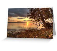 Sundown Upon a Leaning Cedar Greeting Card