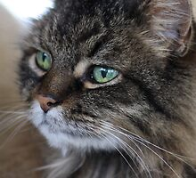 Rascal Cat Profile by Laura Godden