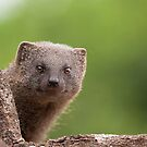 Mongoose Just Checking You by Warren. A. Williams