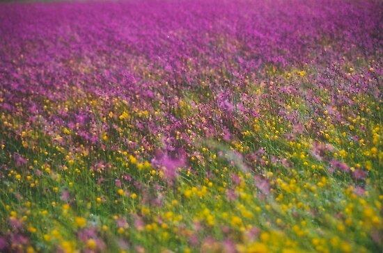 7 ★★★★★ . Frühling in den Alpen . The Flowers of the Alps . The Dachstein Mountains . Austria. Doktor Faustus. Favorites: 3 Views: 554 . Danke ! by © Andrzej Goszcz,M.D. Ph.D