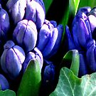 Hyacinths So Blue by AngieDavies