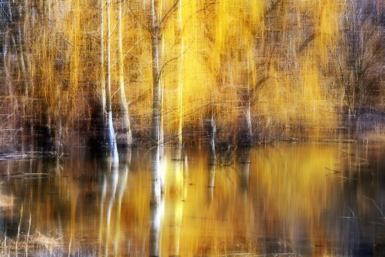 Golden Reflections by Brian Gaynor