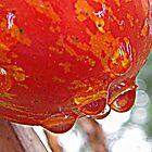 Fresh Tomato by RebekahShay