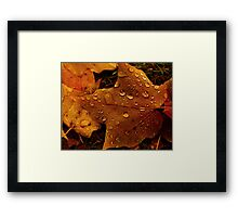 Rain on Leaf Framed Print