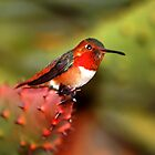 Hummingbird sitting on cacti by loiteke