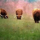 Herd by Carol Bleasdale