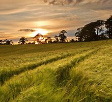Barley Field Sunset by Derek Smyth