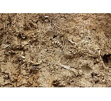 Human Remains Photographic Print