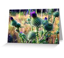 Canadian Thistle Greeting Card