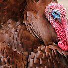 Bourbon Red Domestic Turkey by Edith Reynolds