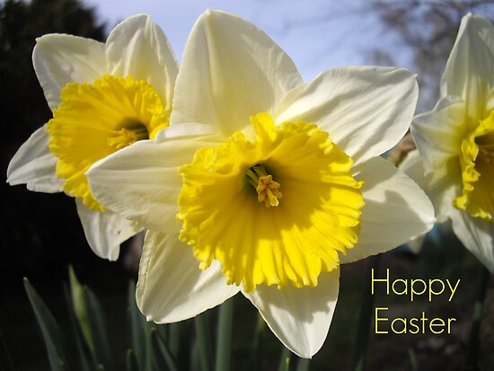 Easter Daffodils by Sally J Hunter