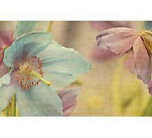 Early summer Photographic Print