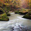 Fall Stream by Martin Rak