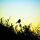 Beach Bird by BeeVaw