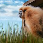 Mogwai The Gibbon by wesland