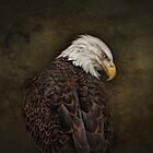 Eagle Profile #2 by Pat Abbott