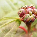 Signs of Spring 2 by Tracy Friesen