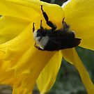 Cold Bumble Bee by SKNickel