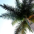 Palm Tree by The Street Child Project