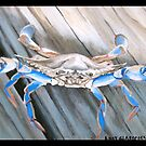 """97. """"The Blue Crab in Rockport, Texas."""" by amyglasscockart"""