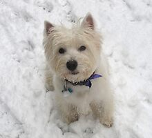 Snow anywhere in the world will always  be the Highlands to a Westie by MarianBendeth