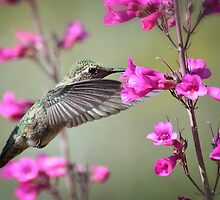 Hummingbird and Spring Flowers by Saija  Lehtonen