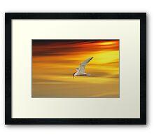 Fliegende Seeschwalbe Framed Print