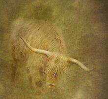 El Torro by Catherine Hamilton-Veal  ©