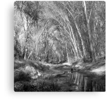Creek Tunnel Canvas Print