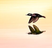 Sunrise Flight by Janet Fikar