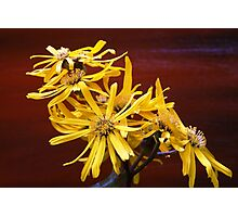 ARTFUL FLOWERS - exotic beauty Photographic Print