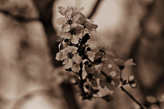 blooming time by ANDREA SIDENSTRICKER