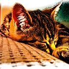 sleepy kitty by BriteFuture