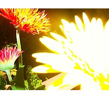 bright night Photographic Print