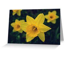 Yellow Daffodils Greeting Card